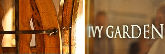 ivy-v