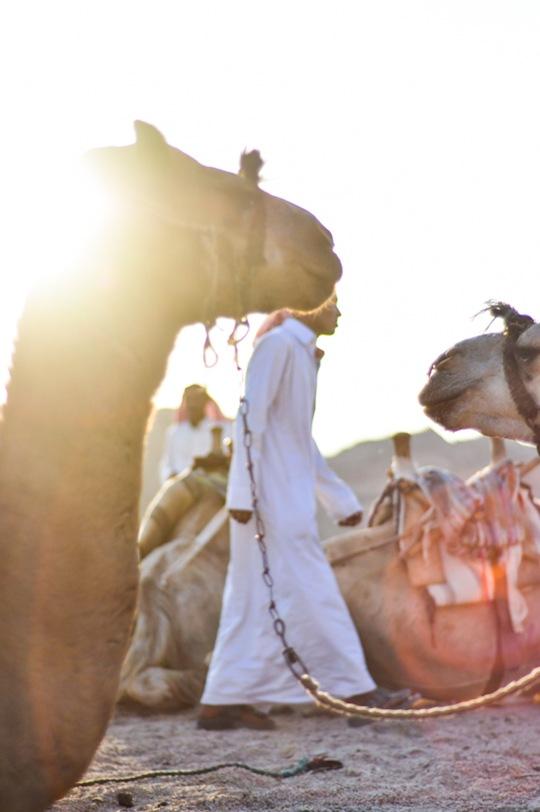 Thankfifi-Bedouin-Nights-11