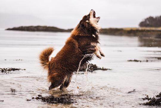 Thankfifi- Over the sea to Skye-15