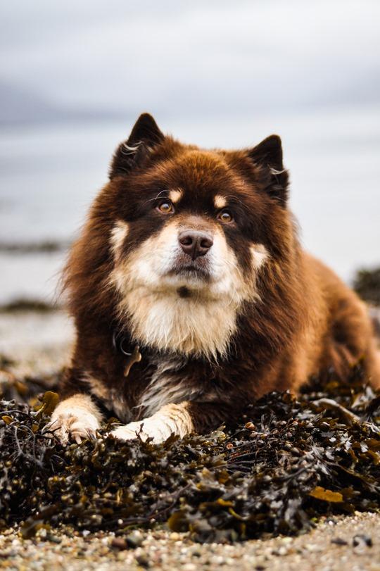 Thankfifi- Over the sea to Skye-4