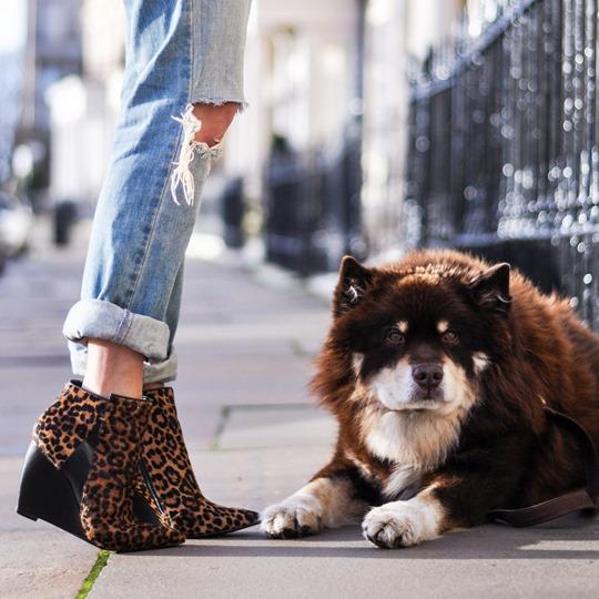 Thankfifi- Cat versus dog-7