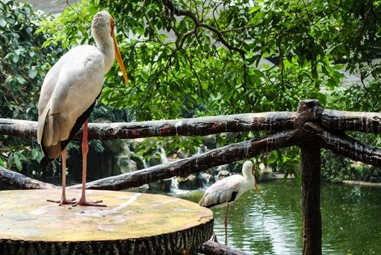 Thankfifi- Kuala Lumpur Bird Park-3