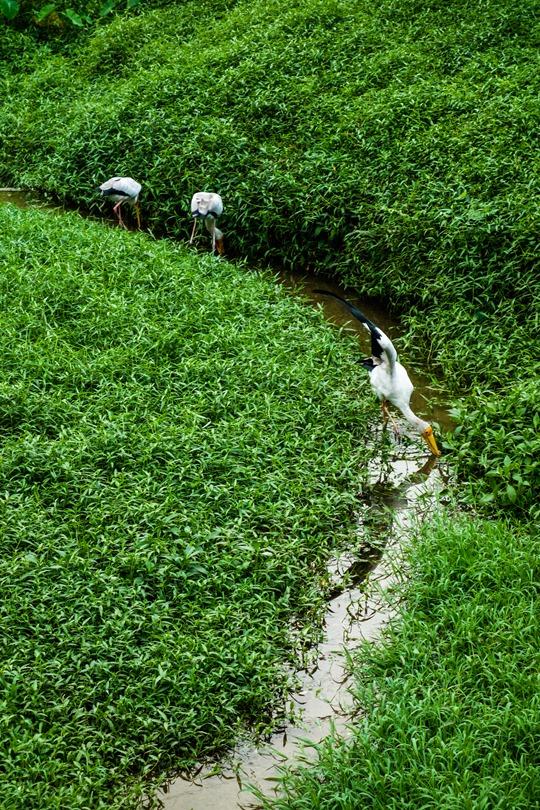 Thankfifi- Kuala Lumpur Bird Park-4