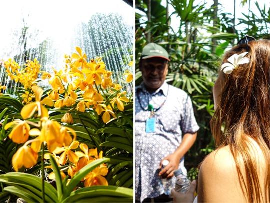 Thankfifi--Kuala-Lumpur-Orchid-Park-6