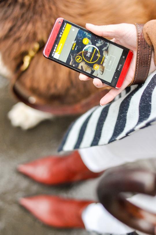 Thankfifi- Pedigree Tracks app-6