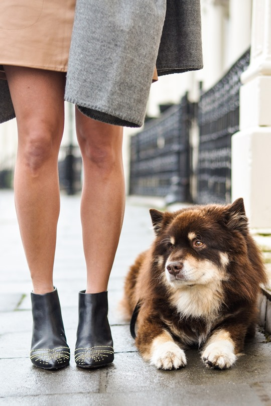 Thankfifi- Topshop blanket cape & a Finnish Lapphund puppy-9