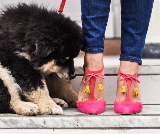 Thankfifi- Crusader - Topshop blanket cape & Boden Alice heels-17