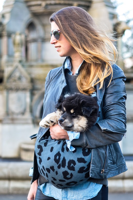 Thankfifi- Double leather dog walks with the Finnish Lapphunds in Todd Lynn & Hallhuber-4