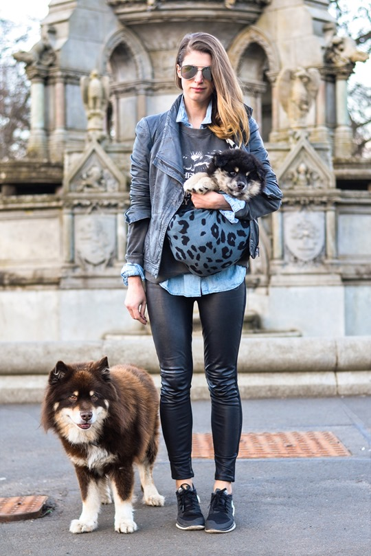 Thankfifi- Double leather dog walks with the Finnish Lapphunds in Todd Lynn & Hallhuber