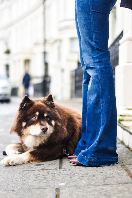 Thankfifi- Flares & layers streetstyle w the Finnish Lapphund puppy-11