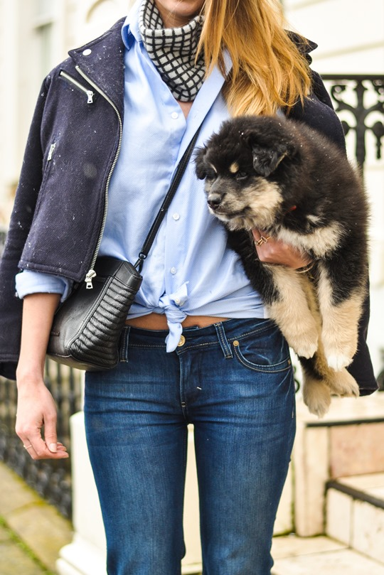 Thankfifi- Flares & layers streetstyle w the Finnish Lapphund puppy-4