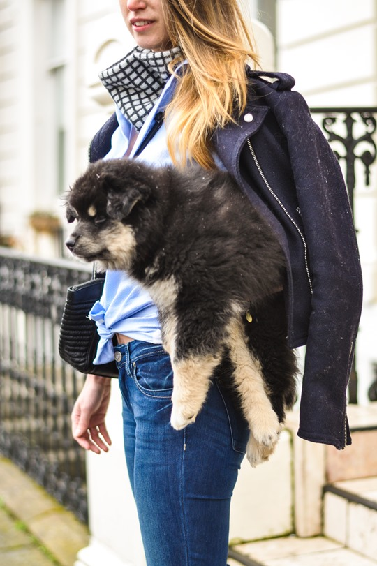Thankfifi- Flares & layers streetstyle w the Finnish Lapphund puppy-5