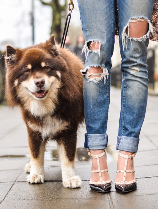 Thankfifi- Glasgow street style with the Finnish Lapphund furries-13