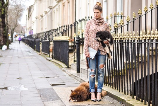 Thankfifi- Glasgow street style with the Finnish Lapphund furries-3