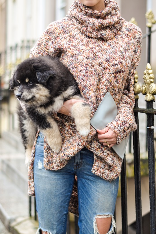 Thankfifi- Glasgow street style with the Finnish Lapphund furries-5