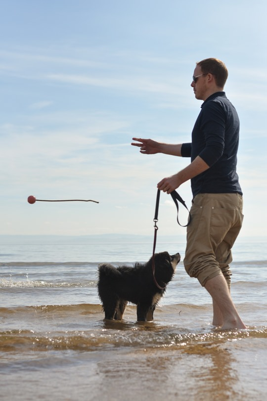 Thankfifi- Elie beach with the Finnish Lapphund family-4