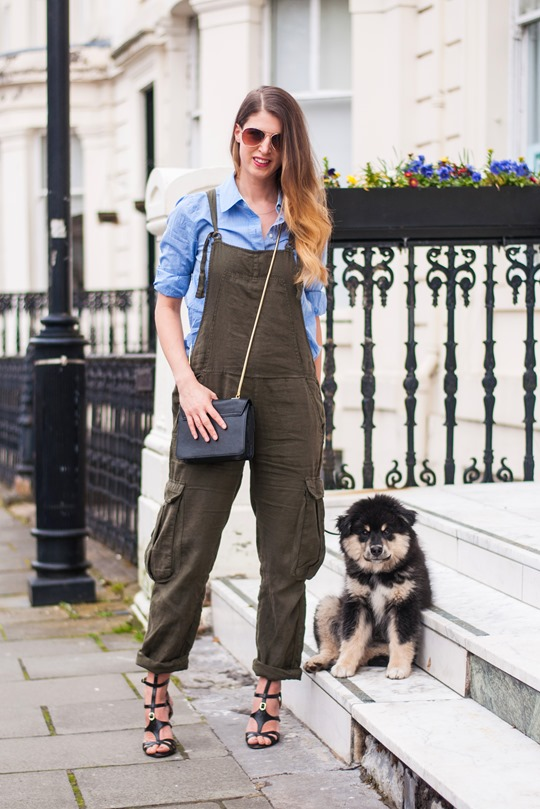 Thankfifi- Khaki overalls & the cutest puppy in the world