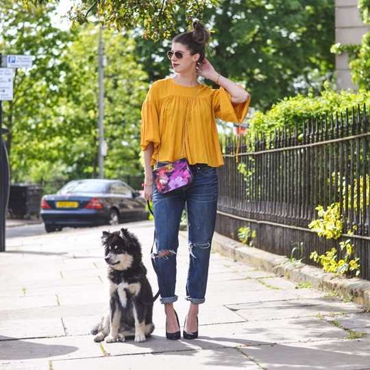 Thankfifi- H&M Trend yellow balloon sleeve blouse & the Finnish Lapphund puppy-4