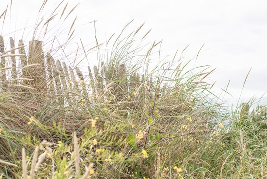 Thankfifi- Troon beach, Scotland - T by Alexander Wang stripe tank & Reiss yellow fedora-13