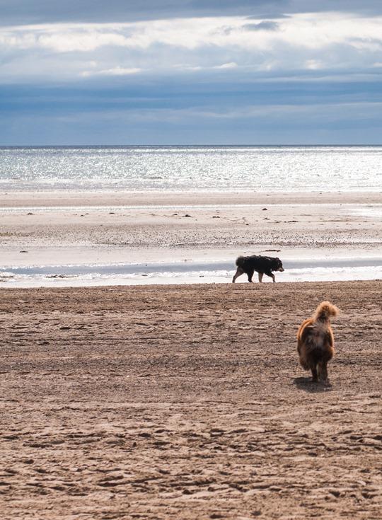 Thankfifi- Troon beach, Scotland - T by Alexander Wang stripe tank & Reiss yellow fedora-18