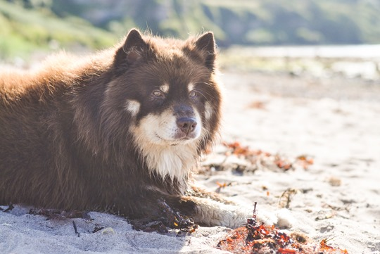 Thankfifi- Beautiful Scottish beach - Heads of Ayr-3