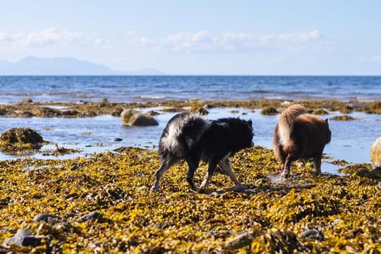 Thankfifi- Beautiful Scottish beach - Heads of Ayr-8