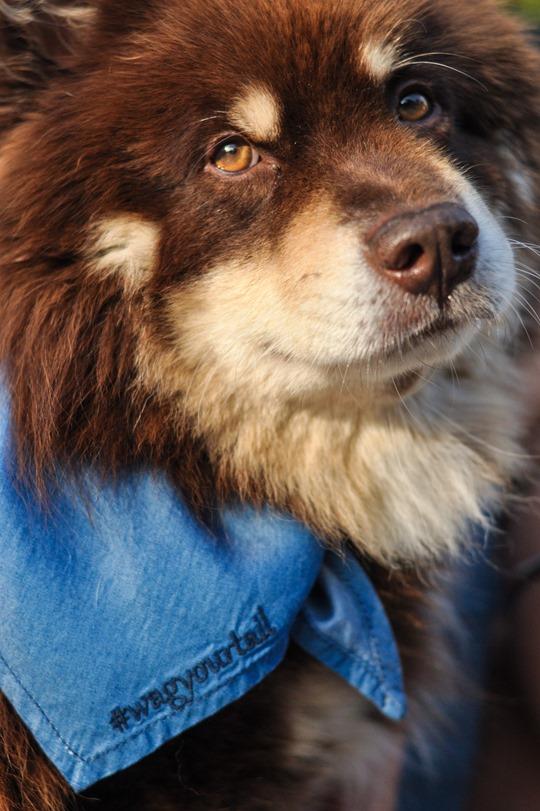 Thankfifi- Denim & dogs street style - Oasis #wagyourtail-11