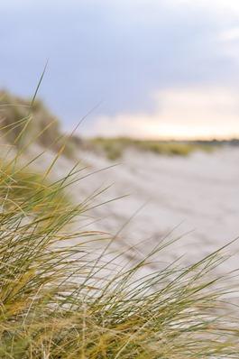 Thankfifi- Culbin Sands, Nairn beach-2