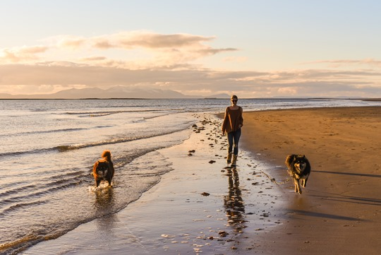 Troon beach with the Finnish Lapphunds - Thankfifi-20