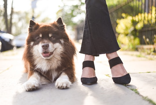 Finnish Lapphund - Thankfifi, Scottish fashion blog