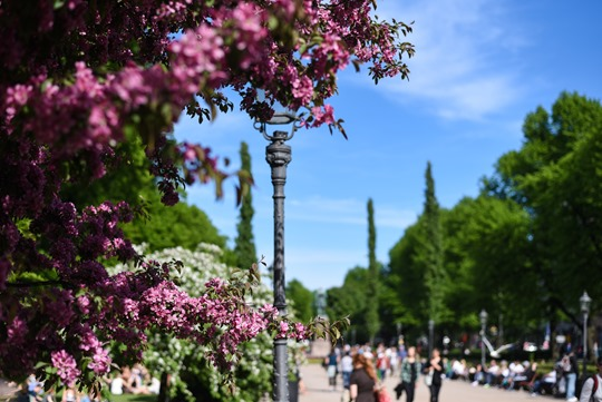 48 hours in Helsinki - Thankfifi, Scottish travel blog-2