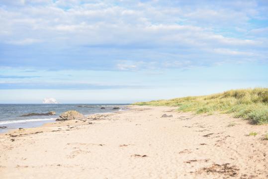 Finnish Lapphunds on North Berwick beach - Thankfifi Scottish travel blog-2