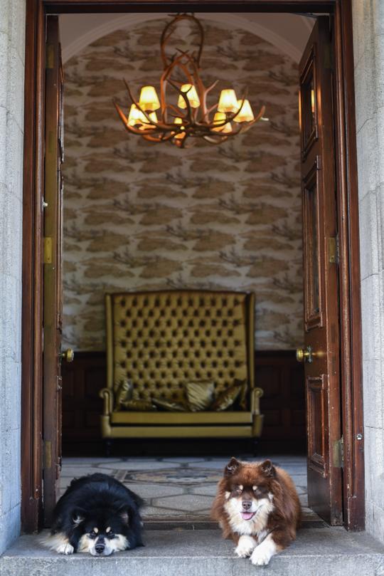 Mercure Ardoe House Hotel, Aberdeen review - Thankfifi Scottish travel blog-12