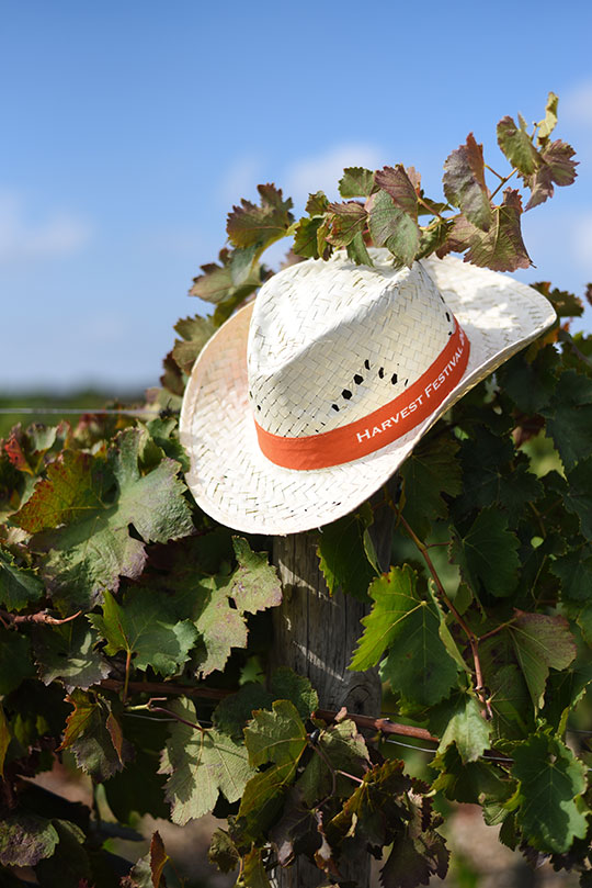 chateau-lhospitalet-vineyard-harvest-festival-thankfifi-scottish-travel-blog-34
