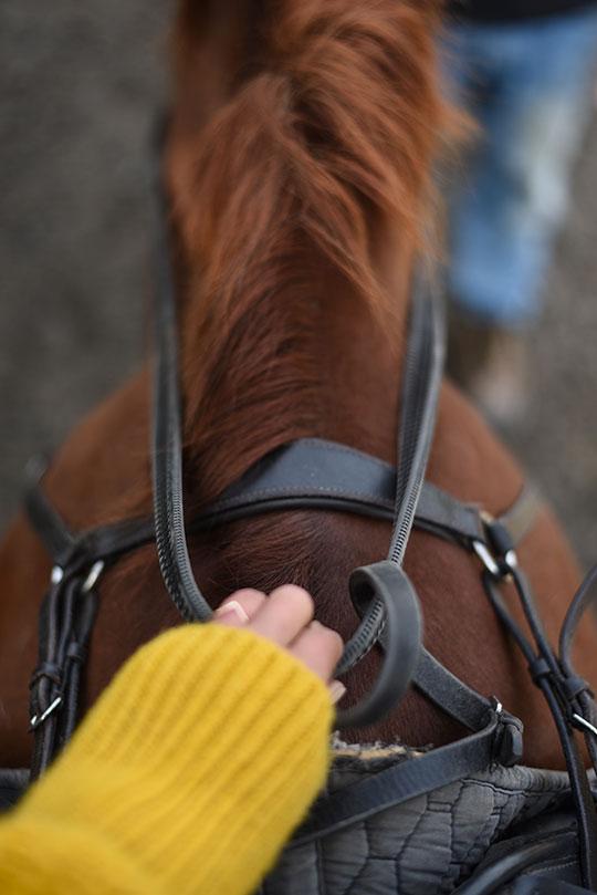 horse-riding-crieff-hydro-thankfifi-scottish-travel-blog
