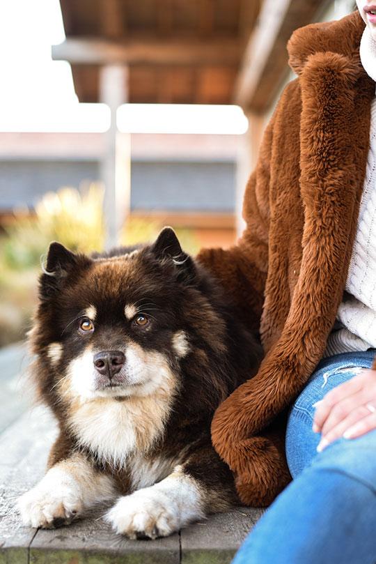 karen-millen-teddy-fur-coat-thankfifi-scottish-fashion-blog-6