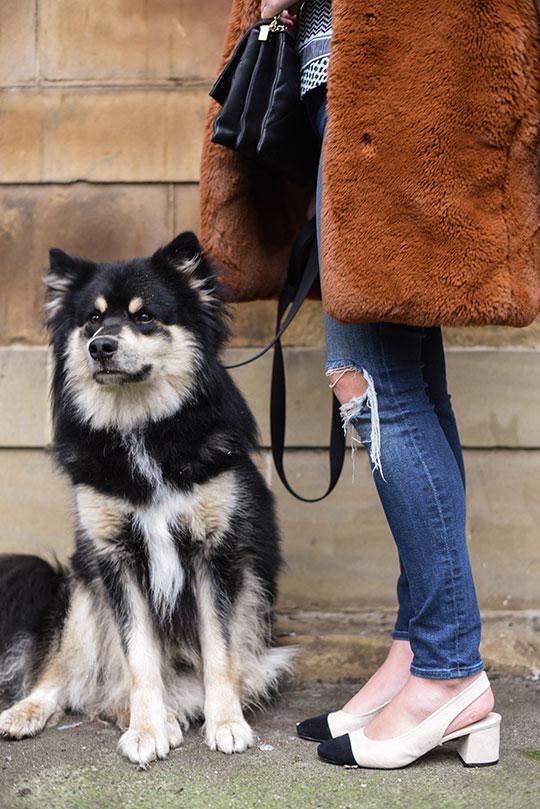 Cecilie-Copenhagen-scarf-blouse-&-Karen-Millen-teddy-fur-coat---Thankfifi-Scottish-fashion-blog-4
