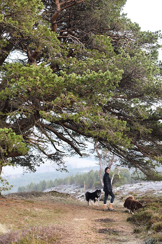 Kenmore-Hill-walk-near-Aberfeldy---Thankfifi-Scottish-travel-blog-12