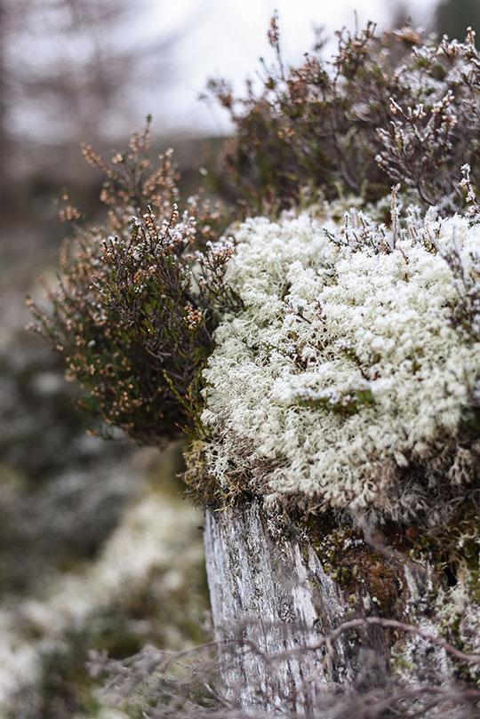 Kenmore-Hill-walk-near-Aberfeldy---Thankfifi-Scottish-travel-blog-13