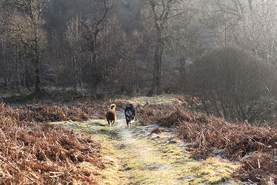 Kenmore-Hill-walk-near-Aberfeldy---Thankfifi-Scottish-travel-blog-2